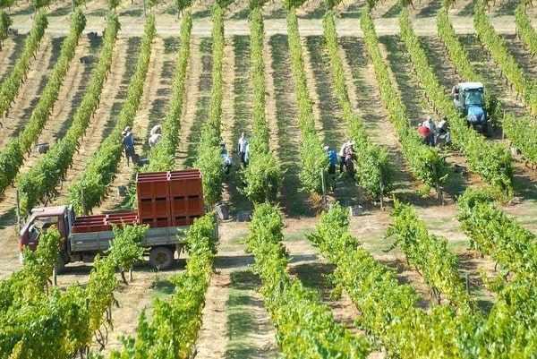 Востребованные профессии и зарплаты в Португалии для иммигрантов